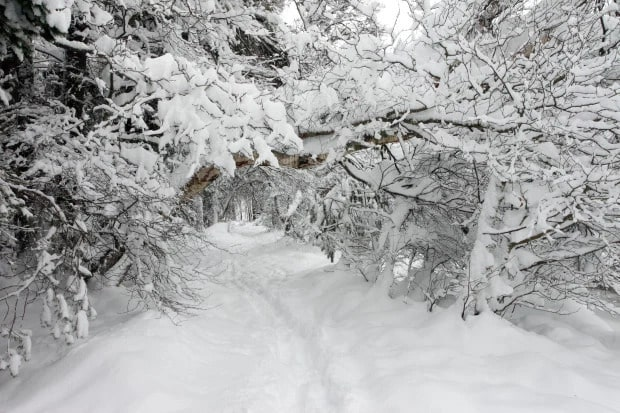 Thick snow on Trees
