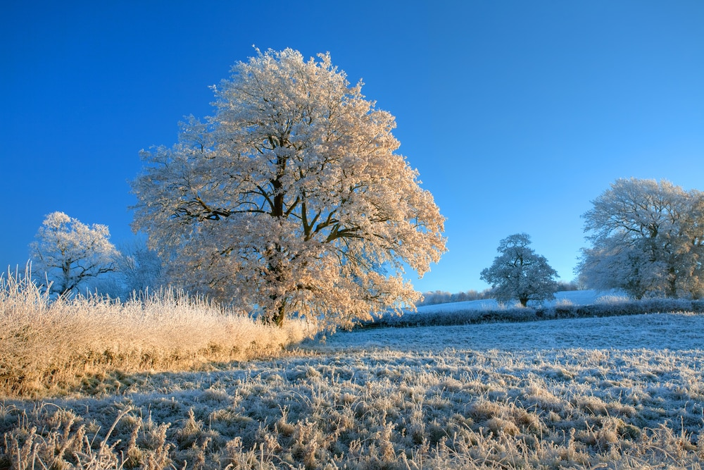 UK Frost