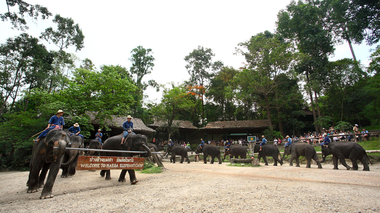 Elephants in Thailand 'set free' in wake of COVID-19