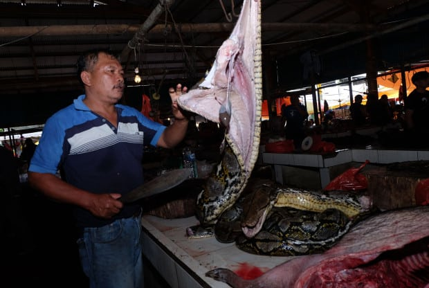 Indonesia wet market selling bats, dogs and cats despite coronavirus