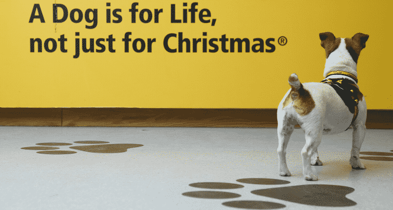 A dog is for life not just for christmas