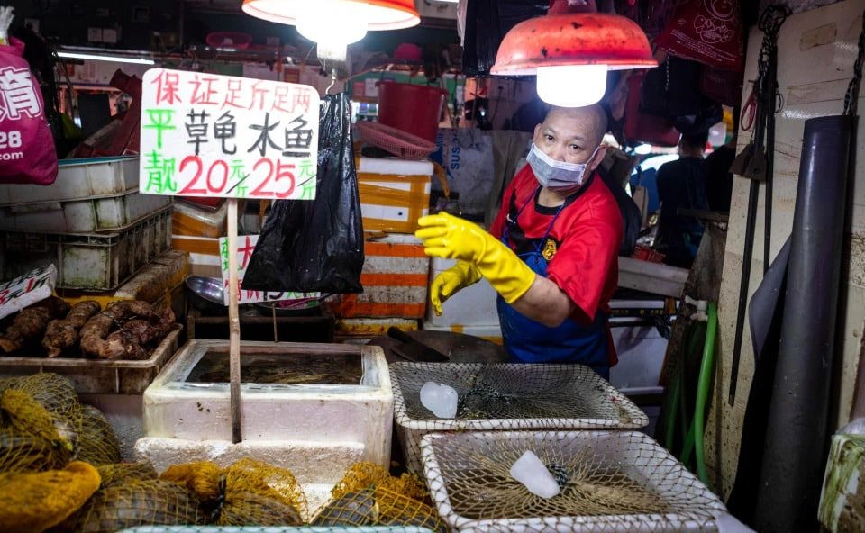 Chinese Wet Markets selling live frogs and turtles despite pandemic