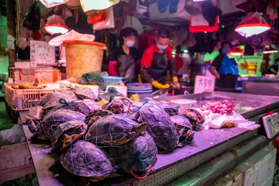 Pasar Basah China menjual katak dan penyu hidup meskipun terjadi pandemi