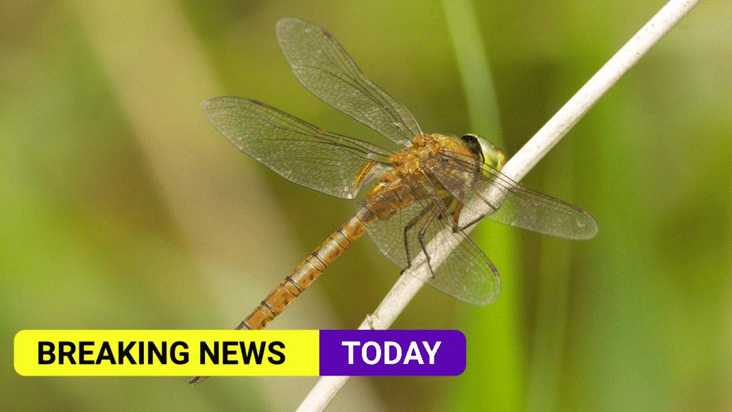 Dragonflies spread north in warming world