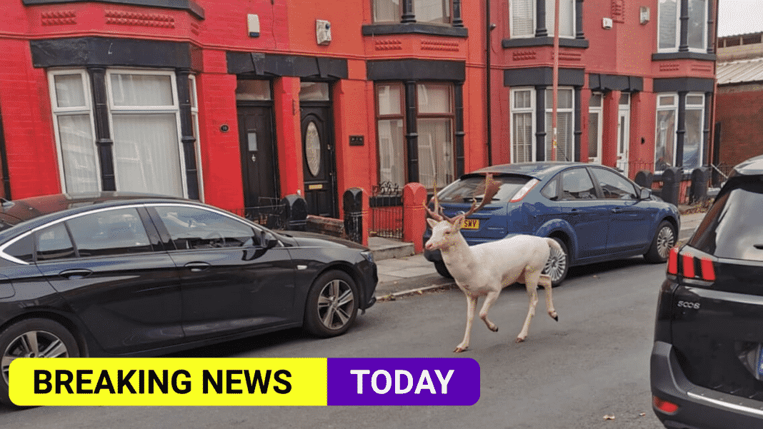 Police criticised for killing rare white stag roaming around Merseyside